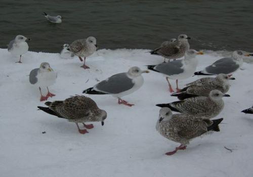 Strandvoegel (zingst-im-winter_100_6768.JPG) wird geladen. Ein Zingster Winter erwartet Sie.