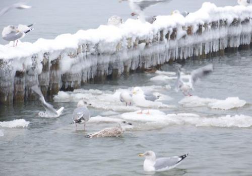 Strandvoegel (zingst-im-winter_100_6772.JPG) wird geladen. Ein Zingster Winter erwartet Sie.