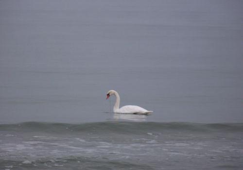 Strandvoegel (zingst-im-winter_100_6773.JPG) wird geladen. Ein Zingster Winter erwartet Sie.