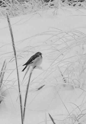 Strandwald (zingst-im-winter_100_6797.JPG) wird geladen. Ein Zingster Winter erwartet Sie.