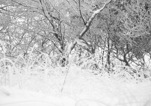 Strandwald (zingst-im-winter_100_6798.JPG) wird geladen. Ein Zingster Winter erwartet Sie.