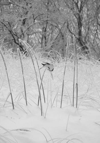 Strandwald (zingst-im-winter_100_6799.JPG) wird geladen. Ein Zingster Winter erwartet Sie.