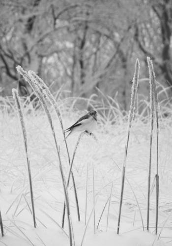 Strandwald (zingst-im-winter_100_6800.JPG) wird geladen. Ein Zingster Winter erwartet Sie.